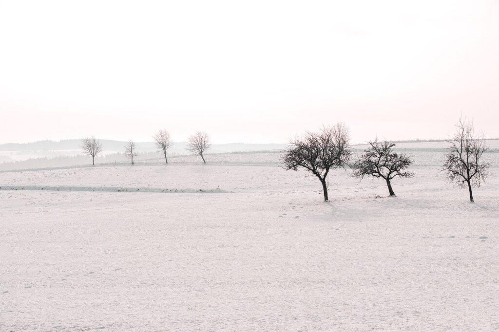 field, trees, snow