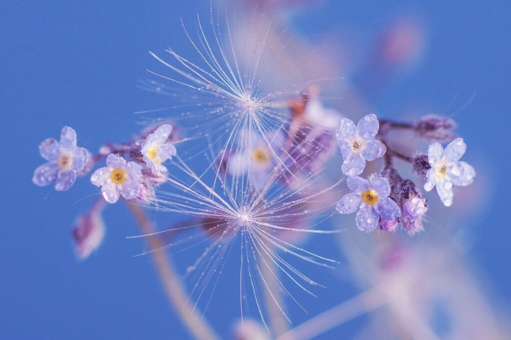 spring, flowers, forget me not